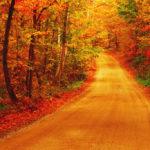 日帰りOK!秋の人気レジャースポット